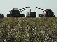 Совместное выращивание подсолнечника на выгодных условиях с ПБФ Колос