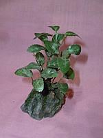 Камень с искусственным растением 10 сантиметров высота