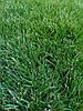 Как посадить  газон своими руками