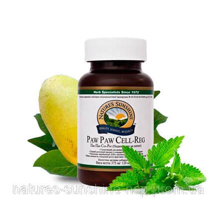 Paw Paw Cell - Reg Пао Пао Сел - Рег Пау Пау БАД НСП Азимина Ацетогенин в  лечении рака