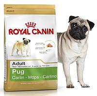 Корм для собак породы Мопс Royal Canin (Роял Канин) Pug Adult 25 Основное питание, Для взрослых животных, Собаки, Royal Canin, Франция, 3 кг, Сухие корма