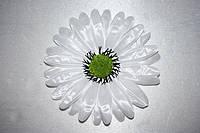 Атласная ромашка № 22, Ø 13см белый