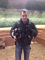 Карликові міні кізоньки і камерунські кози