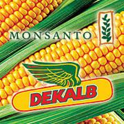 Кукуруза Dekalb от Monsanto