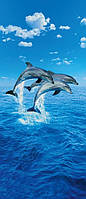 Фотообои на двери  Три дельфина размер 200 х 86 см