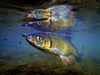 Рыбные места в Украине
