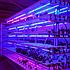 Светодиодный фитосветильник Fito Line 65 (65 Вт, 1-2 кв.м), фото 4