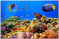 Панно Рыбы в море,кафель на стены,  плитка 20х30см.