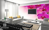 3d фотообои на стену Орхидеи