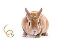 Глисты у кроликов лечение