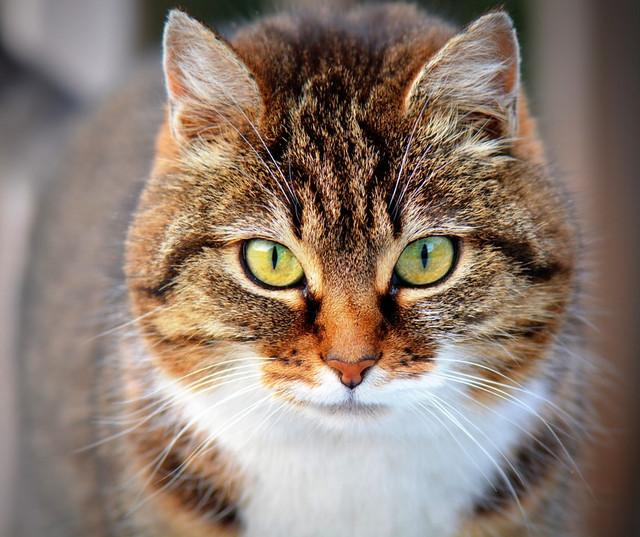 Лечебный корм для кошек при почечной недостаточности Royal Canin Renal Special RSF26