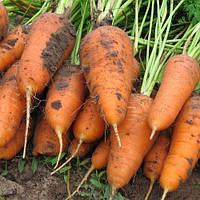 Морковь Шантане семена сорта среднеспелой высокоурожайной моркови с тупым кончиком для хранения
