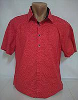Рубашка мужская короткий рукав p. 3XL, 5XL