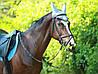Оренда коня для фото та відео-зйомки