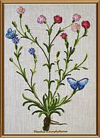 Ботаника Гвоздика травянка  ЕМ 4021