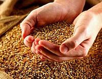 Протравители для пшеницы