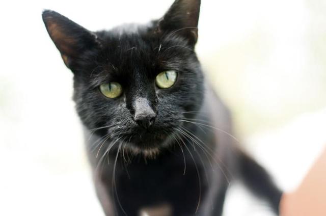 Лечебный корм для кошек Purina Veterinary Diets NF Renal Feline Formula