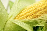 Протравители для кукурузы