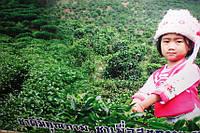 Элитный чай с плантаций Таиланда.