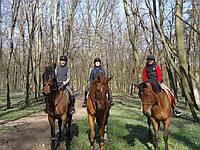 Прокат лошадей, конные прогулки
