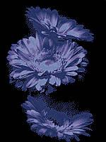"""Схема для вышивки """"Синяя гербера"""""""