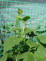 Сетка шпалерная (для огурцов) Green YARD (ячейка 130мм х 150мм) 1,7м/ 500м рул.