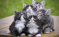 Какие витамины давать кошкам