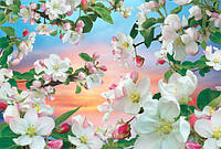 Фотошпалери *Яблуні в цвіту* 196х280