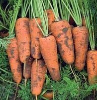 Морковь Каскад F1 семена сорта высокоурожайной поздней моркови с тупым кончиком для хранения