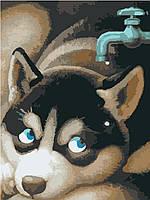 Картина по номерам без коробки Идейка Щенок хаски (KHO2444) 30 х 40 см