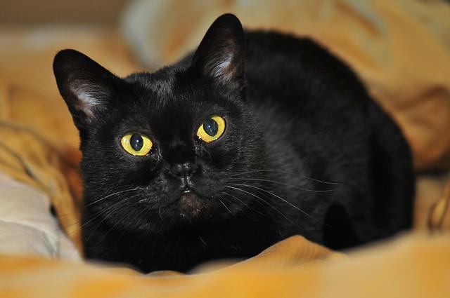 Корм для стерилизованных кошек Royal Canin Sterilised 37