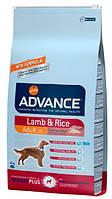 Advance (Эдванс) Dog Lamb & Rice (12 кг) корм для взрослых собак c ягненком и рисом