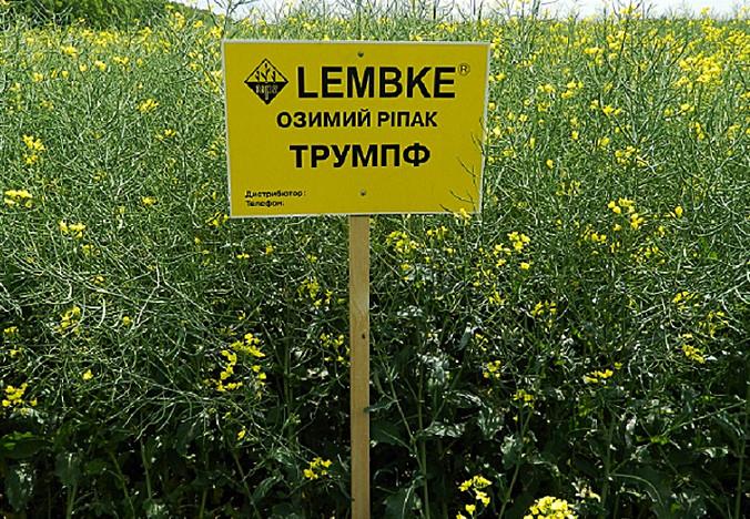 Семена Рапса озимого Трумпф Lembke