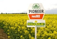 Семена озимого рапса Пионер