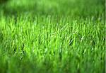 Зелені процедури – догляд за газоном