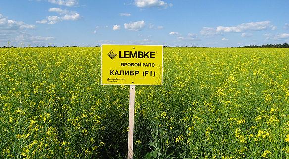 Семена Рапса ярового Калибр Lembke