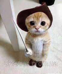 Страхование кошек