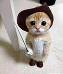 Страхування кішок