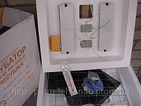 Инкубатор Несушка на 63 яйца 220/12 цифровой терморегулятор и автоматический переворот