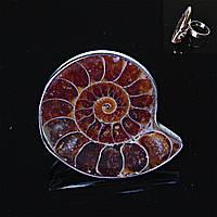 Кольцо без р-р  Аммонит природный различной формы и размера