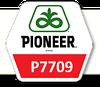 Семена Кукурузы П7709 Pioneer