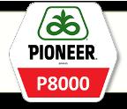 Семена кукурузы П8000 Pioneer