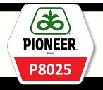 Семена кукурузы П8025 Pioneer