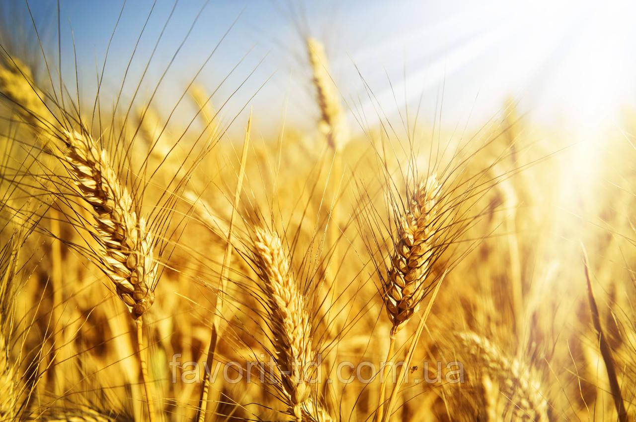 Фунгициды для пшеницы