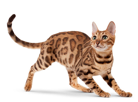 Корм для пожилых кошек старше 7 лет Royal Canin Senior Consult Stage 1