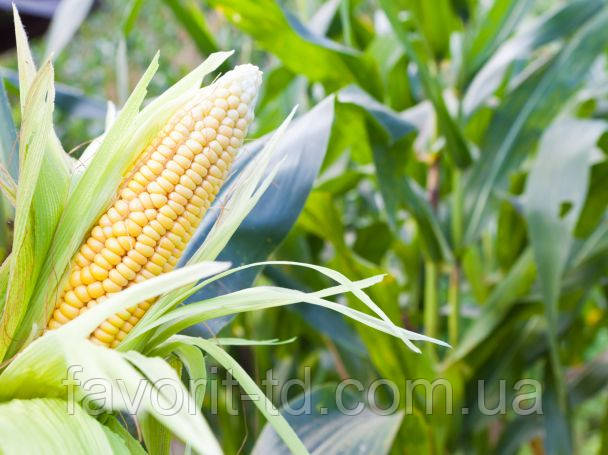Фунгициды для кукурузы