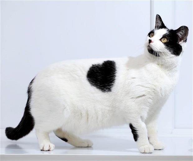 Корм для стерилизованых кошек до 7 лет Royal Canin Young Female S/O