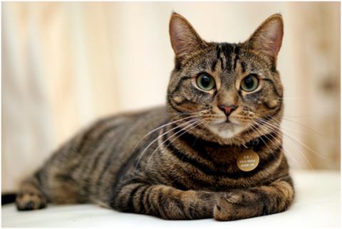 Корм для стерилизованых котов до 7 лет Royal Canin Young Male S/O