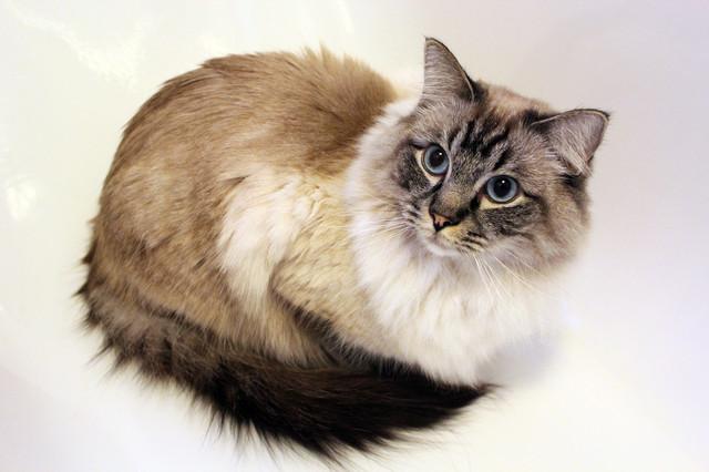 Корм для стерилизованных кошек Pro Plan After Care Turkey