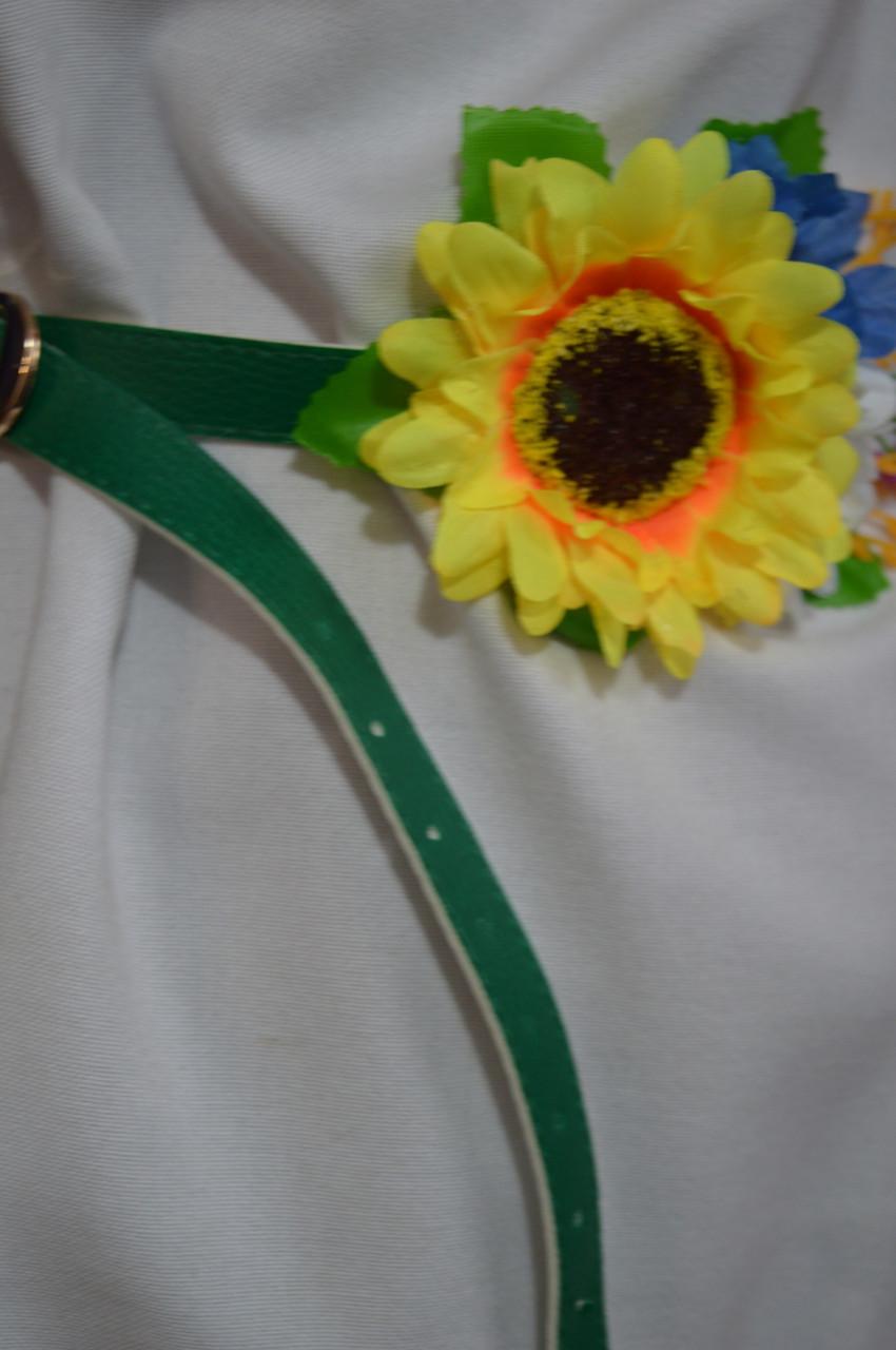 Цветы алиссум уход посадка